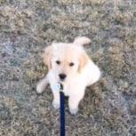 Puppy Palmer